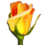 Rosegarden-icon.png
