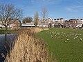 Rotterdam-Kralingen, Park de Nieuwe Plantage positie1 foto7 2016-02-28 14.49.jpg