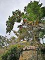 Ruïnes de Kuelap amb flora.jpg