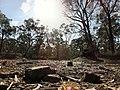 Rushworth VIC 3612, Australia - panoramio (1).jpg