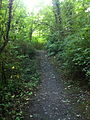 Saltwater State Park Trail 4.jpg