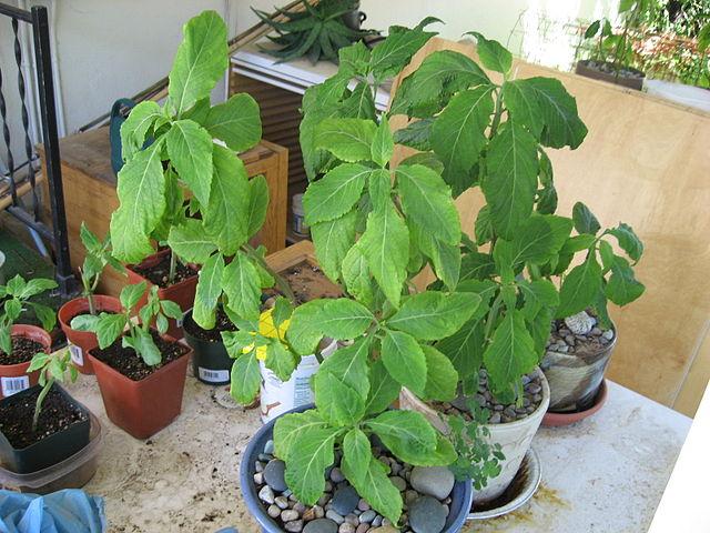 Uma quantidade boa de plantas para um apartamento.