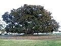 San Diego, CA USA - Balboa Park - panoramio (6).jpg