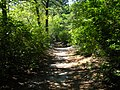 Sans Souci Park - panoramio (2).jpg