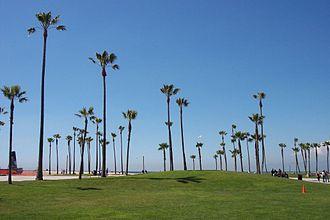 Santa Monica State Beach - Palms on the beach