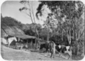 Scene at a dairy farm, 1906 ATLIB 336641.png