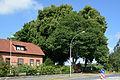 Schleswig-Holstein, Drage, Naturdenkmal NIK 8430.JPG
