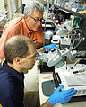 "Scientists inject Nucleic acids into Mosquitoes to ""silence"" specific genes - USDA-ARS.jpg"