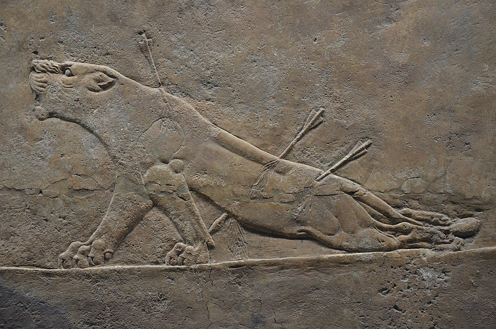 Sculpted reliefs depicting Ashurbanipal, the last great Assyrian king, hunting lions, gypsum hall relief from the North Palace of Nineveh (Irak), c. 645-635 BC, British Museum (16722183731)