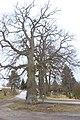 Sedlce, památné stromy.jpg