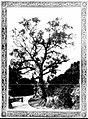 Separation Tree.jpg