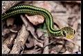 Serpentes (6085489416).jpg