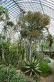 Serre des milieux arides-Jardin des plantes de Nantes (9).jpg