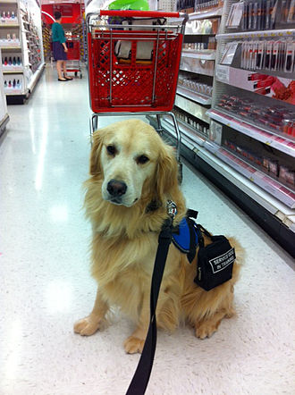 Hearing dog - Service dog out shopping at grocery store.