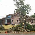 Severe Pruning Broadmoor New Orleans.jpg