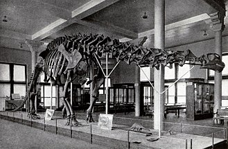 Brontosaurus - Obsolete mount of an apatosaurine referred to B. excelsus (specimen AMNH 460) with sculpted skull, completed in 1905, American Museum of Natural History