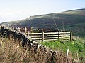 Sheep Pens - geograph.org.uk - 287710.jpg