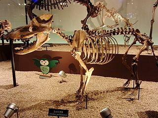 <i>Sinonyx</i> genus of mammals