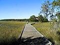 Skidaway Island SP - Big Ferry Trail - panoramio (3).jpg