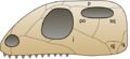 Skull euryapsida 1.png