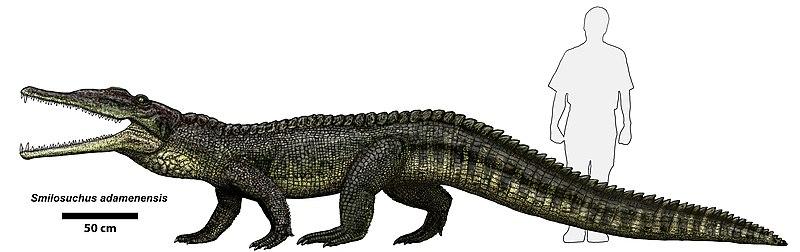 http://upload.wikimedia.org/wikipedia/commons/thumb/0/06/Smilosuchus_adamanensis.jpg/800px-Smilosuchus_adamanensis.jpg?width=600