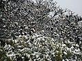 Snow Fall on Mount William Range, Grampians 2.jpg