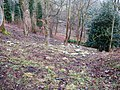 Snowdrops on hillside near Hill House - geograph.org.uk - 1712222.jpg