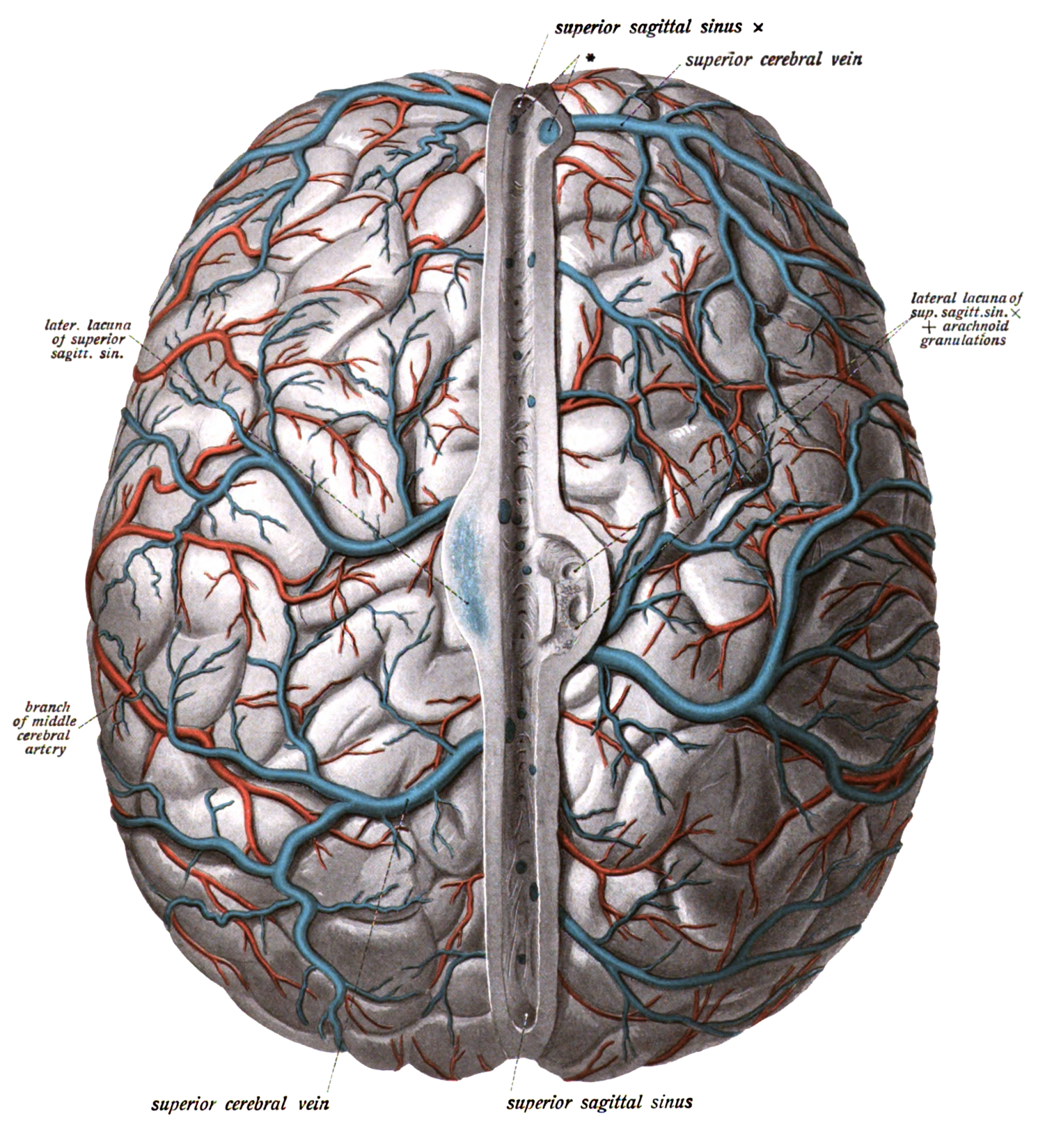 show me a diagram of a volcanic zone collision superior cerebral veins wikipedia