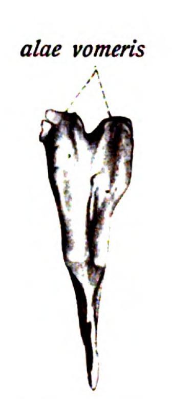 Sobo 1909 74