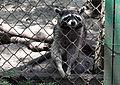 Sofia Zoo E97.jpg