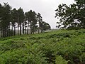 South-east corner of Pitts Wood Inclosure, New Forest - geograph.org.uk - 478205.jpg