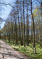 South road in Gullmarsskogen 4.jpg