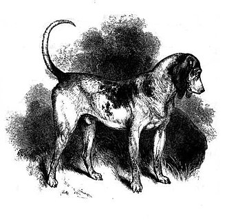 Beagle - The Southern Hound is thought to be an ancestor of the beagle