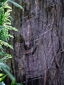 Spider webs.jpg