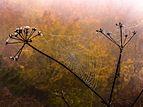 Spinnennetz im Nebel P1320875.jpg