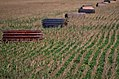 Spring Harvest (17172214631).jpg