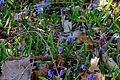 Spring in Lambton Park, Toronto, ON (26463518526).jpg