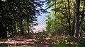 Springville Township, MI 49668, USA - panoramio (1).jpg