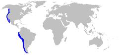 Range of the pacific angelshark
