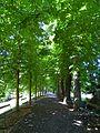 Stadtpark Allee.JPG