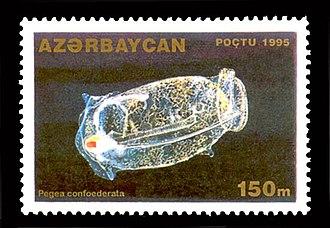 Salp - Pegea confederata on a 1995 stamp from Azerbaijan