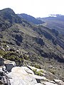 Starr-030721-0150-Leptecophylla tameiameiae-habitat-Kalahaku HNP-Maui (24637703035).jpg