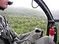 Starr-091120-9962-Polyscias oahuensis-aerial view with Cliff-Koolau Forest Reserve East Maui-Maui (24897685471).jpg