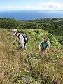 Starr-110924-9292-Andropogon virginicus-habitat with Kim and Greg-Makamakaole-Maui (24996166432).jpg