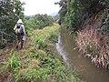 Starr-130311-2046-Syzygium cumini-habit with Dennis view tunnel and Kauhikoa Ditch-Maliko Gulch-Maui (24579786393).jpg