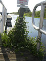 Starr 031108-0004 Mikania scandens.jpg