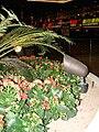 Starr 071225-0725 Kalanchoe blossfeldiana.jpg