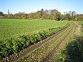 Stickling Green, Colehill Lane - geograph.org.uk - 281987.jpg