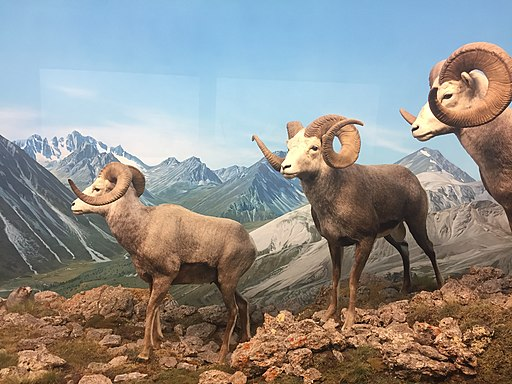 Denver Museum of Nature and Science - Virtual Tour