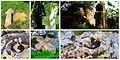 Stone Cross elements (Krastati kamen) Vetren Kuystendil Bulgaria.jpg